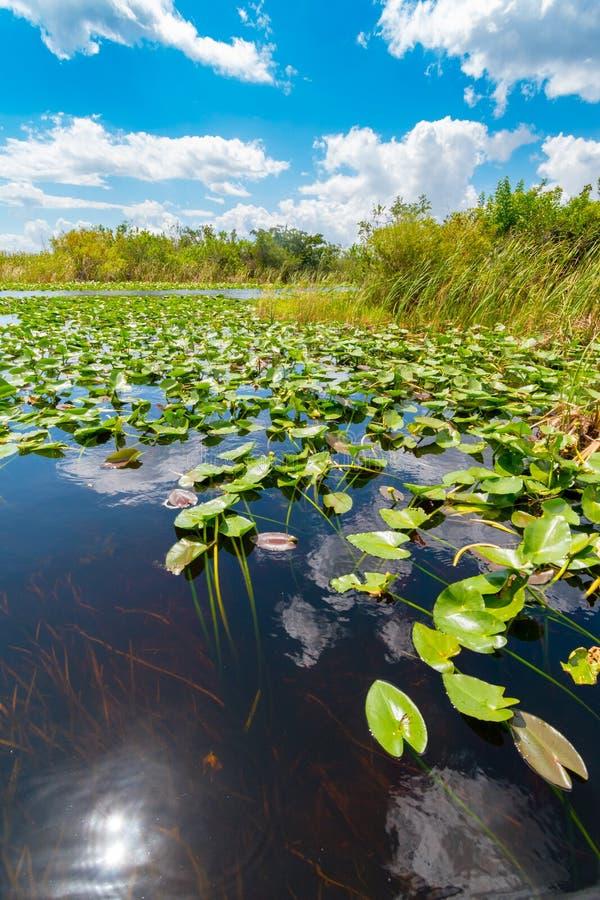 Zone umide del parco nazionale dei terreni paludosi, Florida, Stati Uniti d'America immagine stock libera da diritti