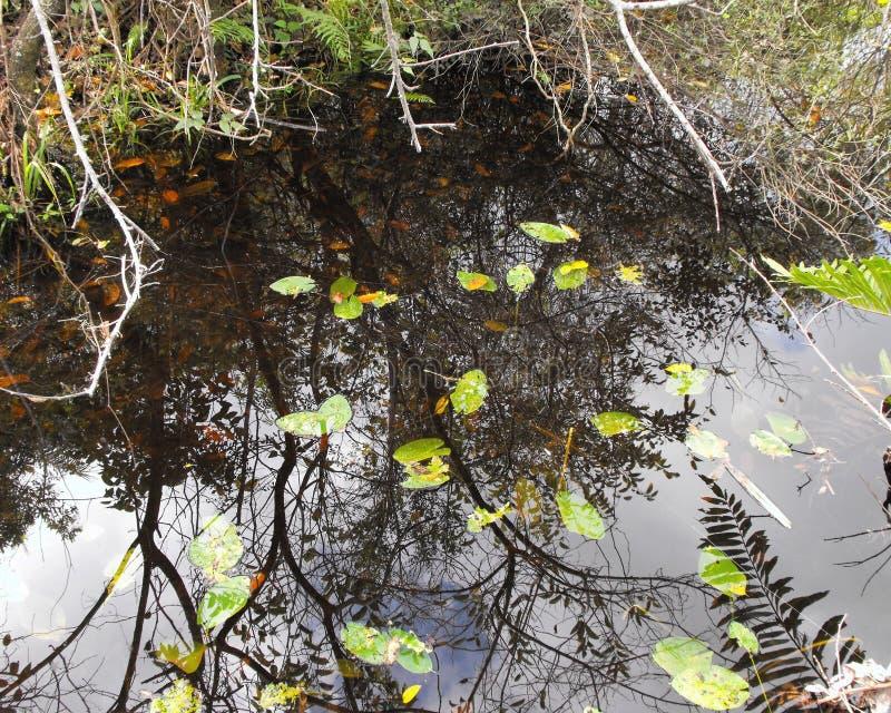Zone umide di Florida fotografia stock libera da diritti