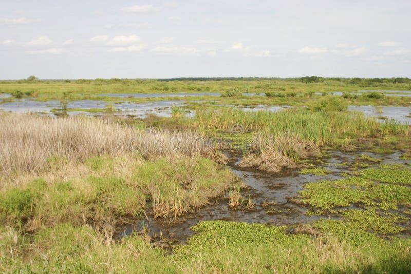 Zone umide di Florida Myakka fotografia stock libera da diritti