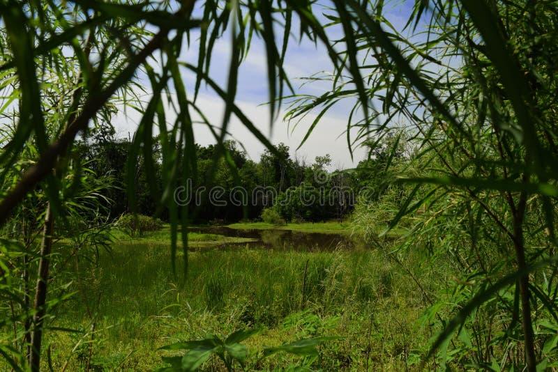 Zone umide naturali nel Missouri immagini stock