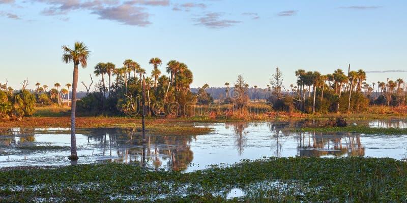 Zone umide sceniche di Florida fotografia stock
