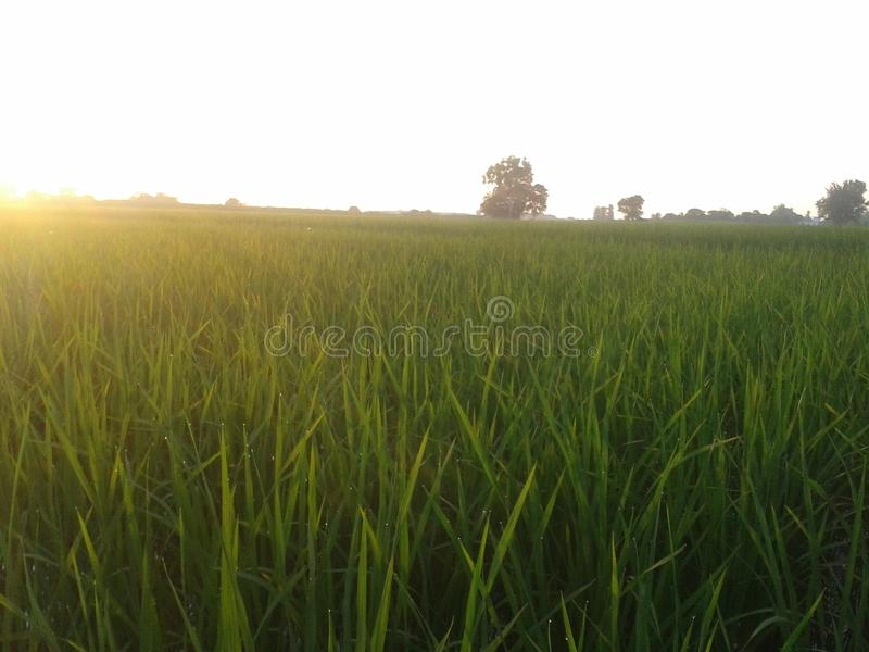 Zone verte image libre de droits
