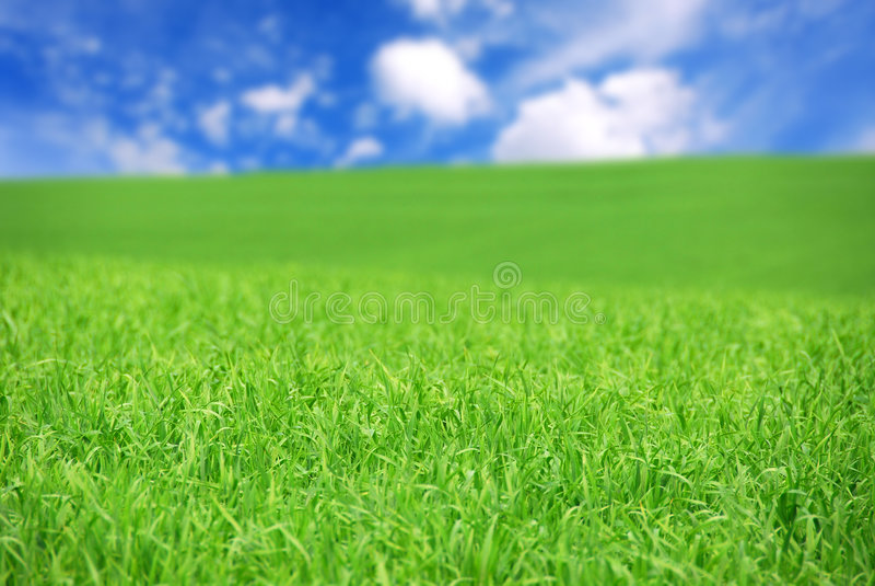 Download Zone verte image stock. Image du bleu, accroissement, affermage - 2131995