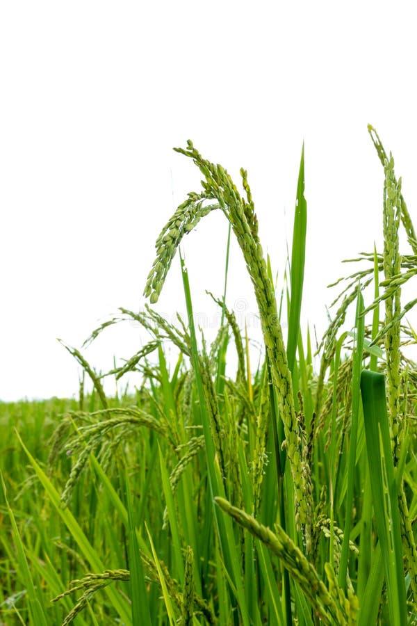 Zone verte photos stock