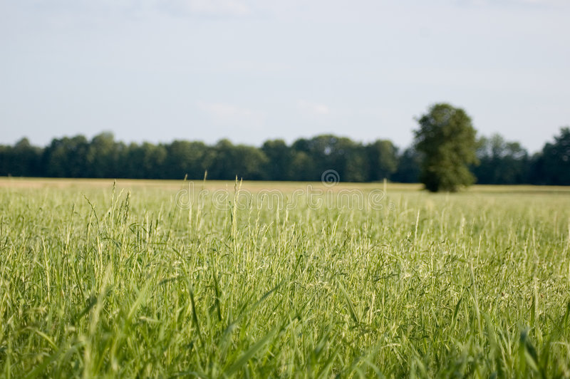 Zone verte, ciel bleu image libre de droits