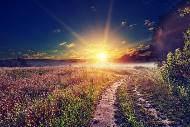 Zone verte et beau coucher du soleil photos stock