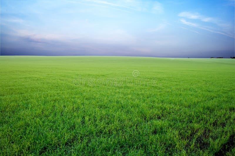 Zone verte et ciel orageux photographie stock