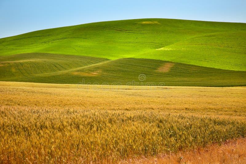 Zones de blé de vert jaune Palouse Washington photos stock