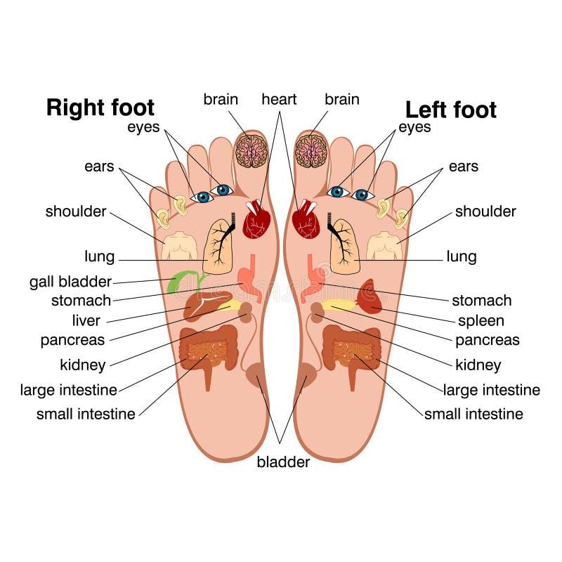 Zones de réflexothérapie des pieds illustration de vecteur