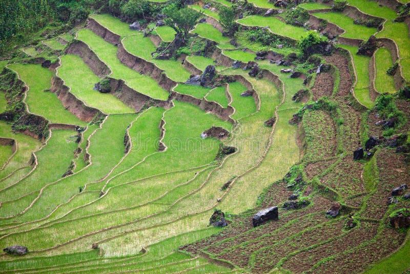 Zones de rizière photo stock