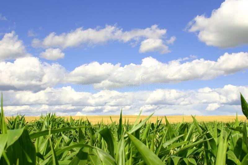 Zones de vert et d'or, cieux bleus image stock