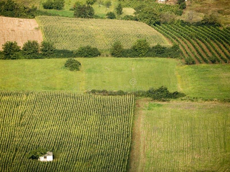 Zones des céréales et des vignes photos libres de droits