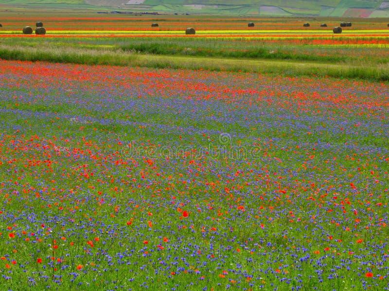 Zones en fleur photographie stock libre de droits