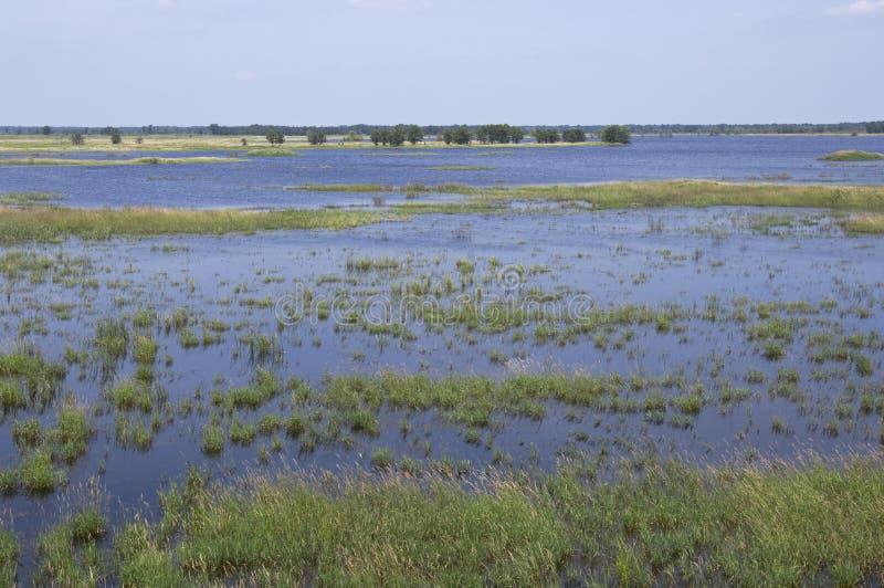 Zones humides de réserve de Necedah photographie stock