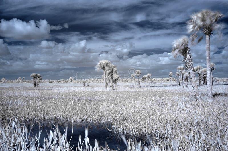 Zones humides infrarouges image stock