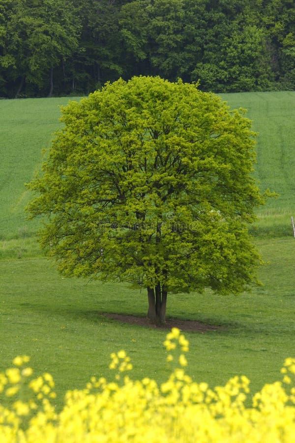 Zones jaunes et vertes photographie stock libre de droits