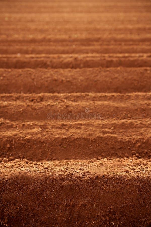 Zones labourées d'agriculture de saleté d'argile rouge photo libre de droits