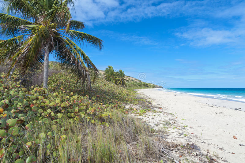 Zoni Beach. Coconut palms, sea grapes and sand on sub-tropical Zoni Beach on Caribbean island of Isla Culebra royalty free stock photography