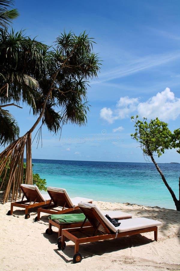 Zonlanterfanters met strand en palmen naast het overzees in de Maldiven stock afbeeldingen