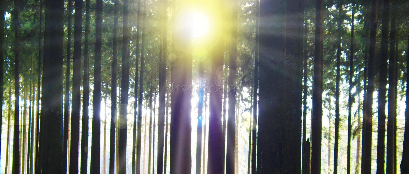 Zonlicht in bos stock foto