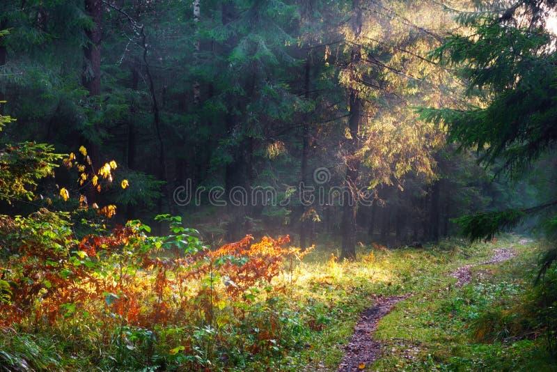 Zonlicht in bos stock afbeeldingen