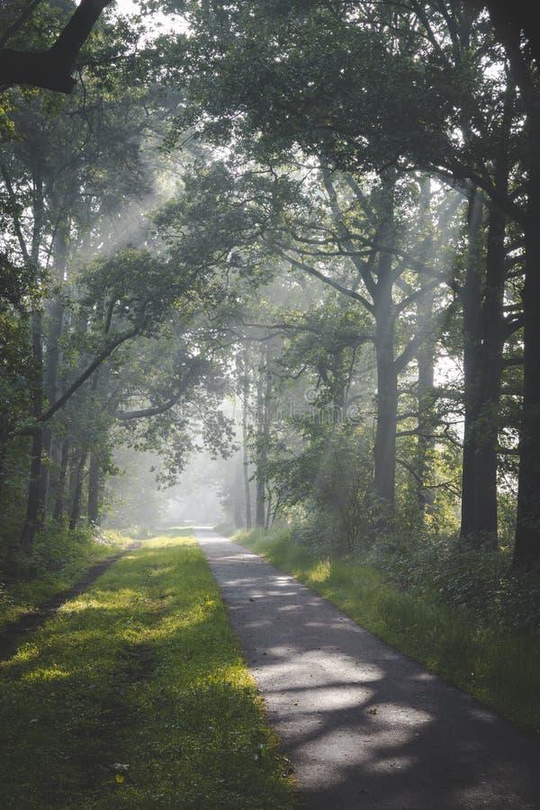 Zonlicht die door bomen en mistige nevelige voorwaarden bij het cirkelen komen en weg lopen De Zonlichtdeur DE boomtoppen over En royalty-vrije stock afbeelding