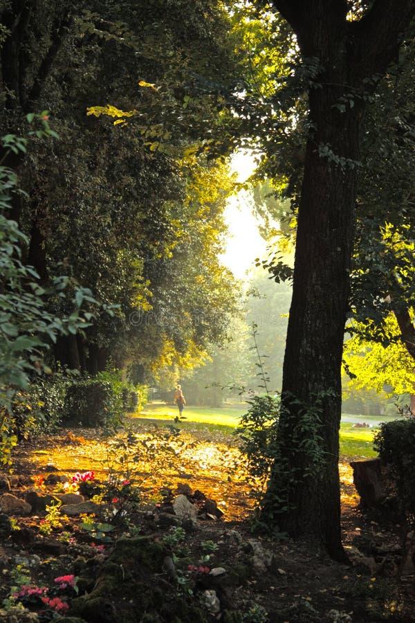 Zonlicht die door bomen in Italië glanzen royalty-vrije stock foto's