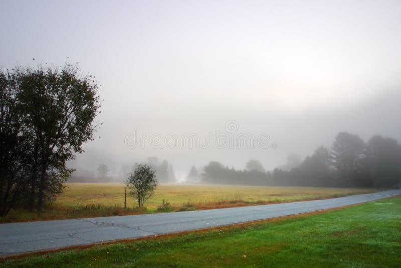 Zonlicht die door mistige bomen op een de herfstochtend wegschieten royalty-vrije stock foto