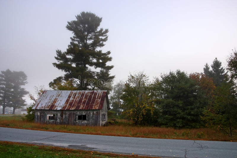 Zonlicht die door mistige bomen op een de herfstochtend wegschieten royalty-vrije stock afbeeldingen