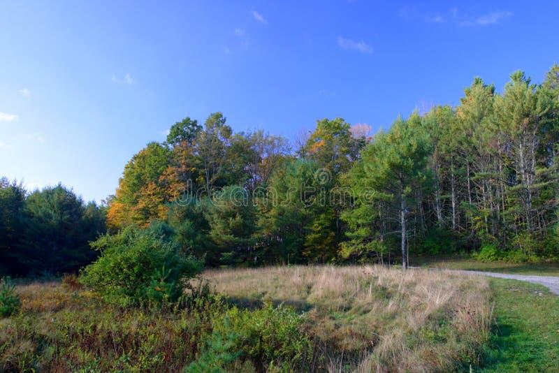 Zonlicht die door mistige bomen op een de herfstochtend wegschieten royalty-vrije stock afbeelding