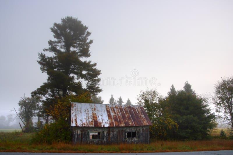 Zonlicht die door mistige bomen op een de herfstochtend wegschieten stock foto's