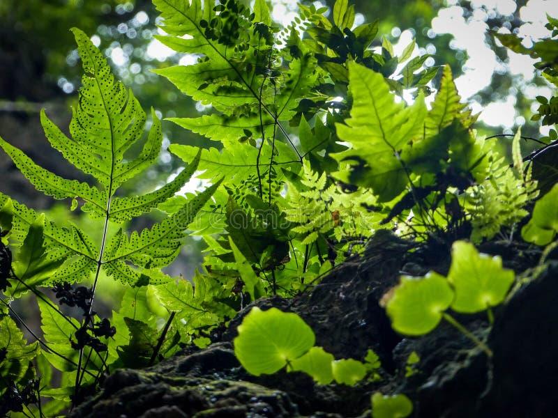 Zonlicht die door tropische meest forrest bladeren glanzen stock afbeeldingen
