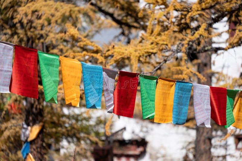 Zonlicht die in gouden pijnboombos die glanzen met kleurrijk vlaggengebed op vallei vliegen royalty-vrije stock foto