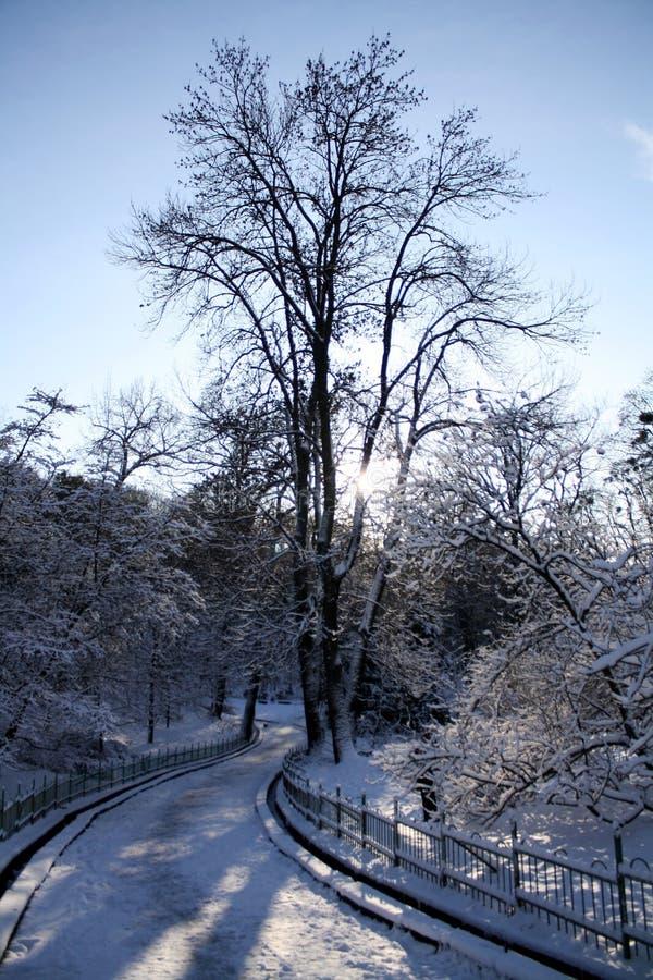 Zonlicht door boomsilhouet in de winterpark stock foto's