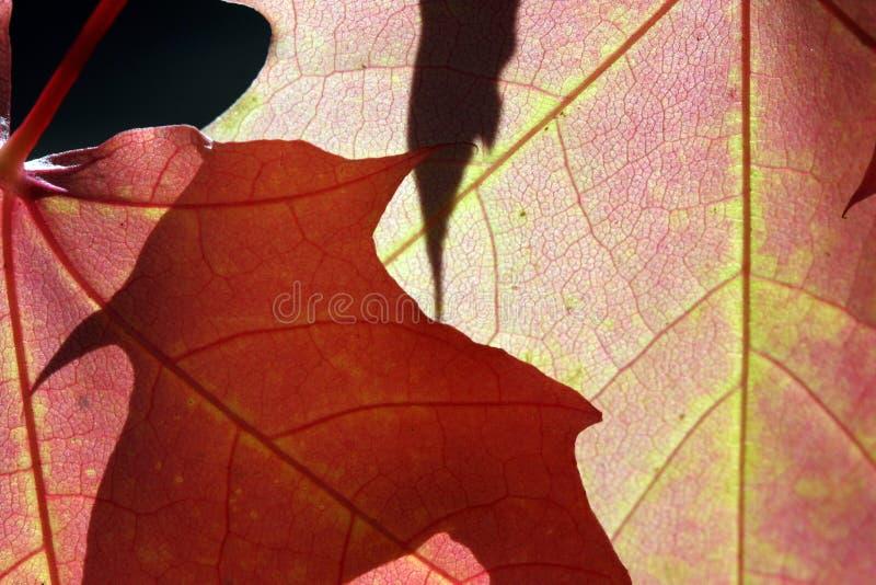 Zonlicht door de Bladeren van de Herfst royalty-vrije stock fotografie