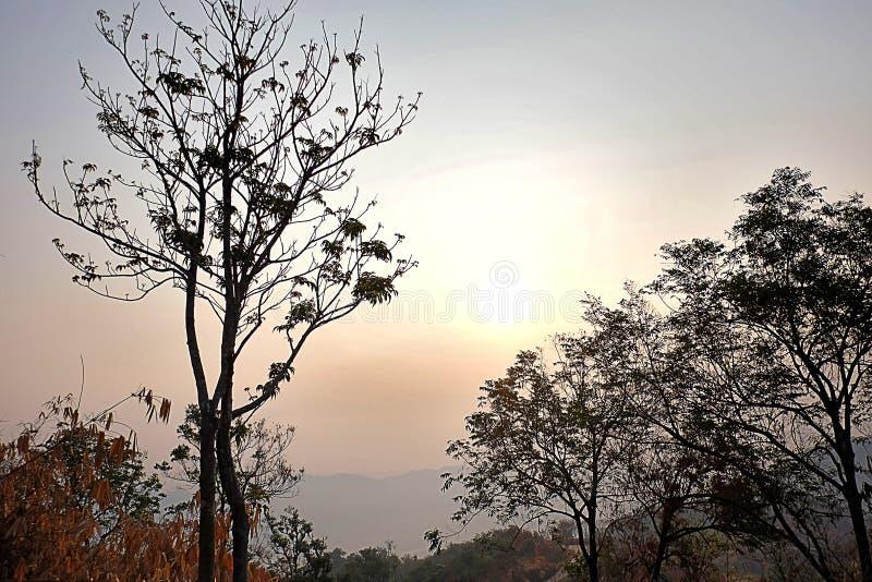 Zonlicht door de droge bomen stock foto's