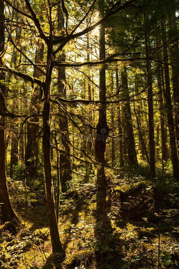 Zonlicht door het dichte bos die het de Bezoekercentrum omringen van het Noordencascades royalty-vrije stock fotografie