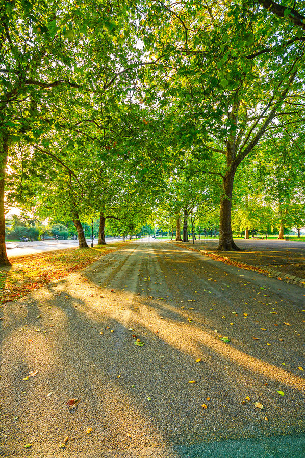 Zonlicht en bomen in Hyde Park-de herfstzonsondergang. Londen, het UK royalty-vrije stock foto's