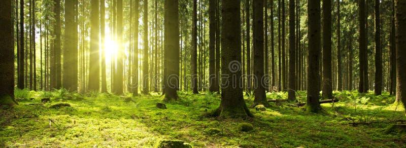 Zonlicht in het groene bos royalty-vrije stock afbeeldingen