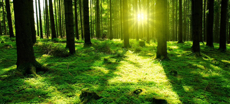 Zonlicht in het groene bos royalty-vrije stock foto