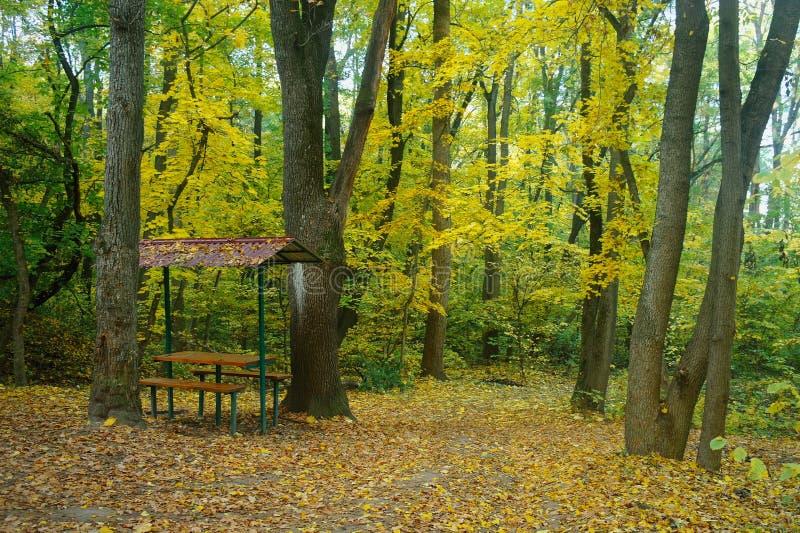 Zonlicht in het landschap van de de herfst bosherfst stock afbeeldingen