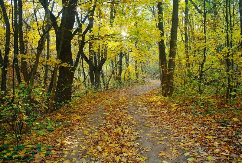 Zonlicht in het landschap van de de herfst bosherfst stock foto's