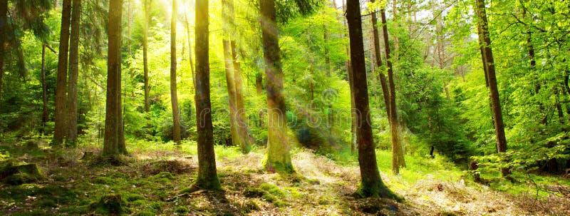 Zonlicht op de aardachtergrond van Duitsland Forest Spring royalty-vrije stock foto