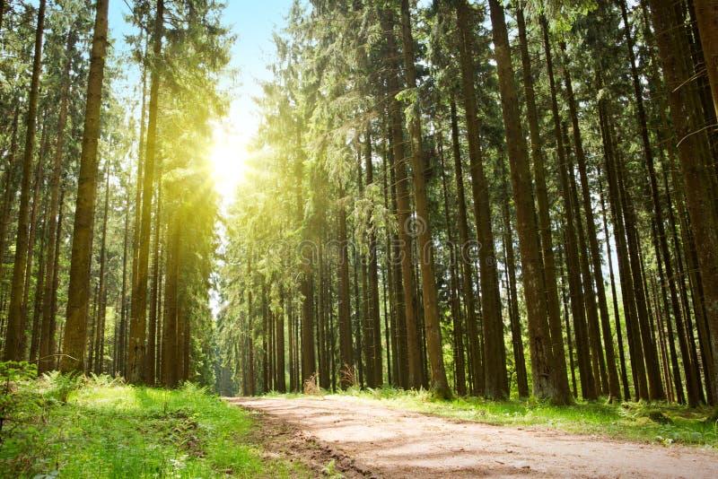 Zonlicht op de achtergrond van de de Lenteaard van Duitsland bos royalty-vrije stock foto's
