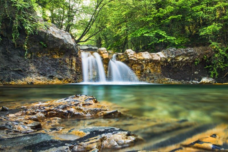 Zonlicht van de de zomer niet stedelijke aard van landschappenkleuren het bos stock fotografie