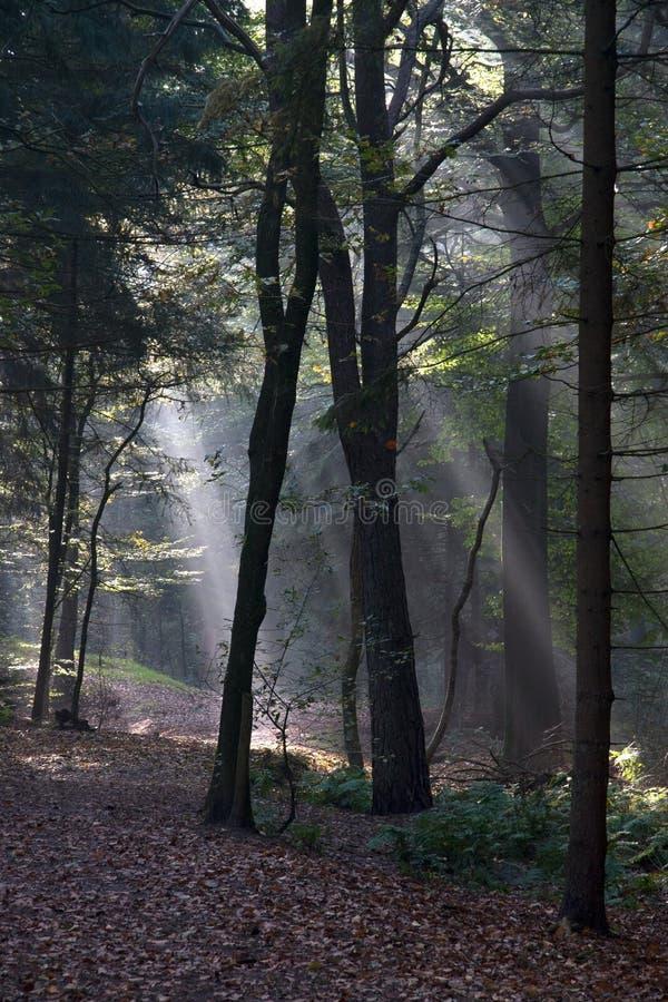 Zonlichtonderbrekingen door het bos van Spaarbankbos in Hoogeveen stock foto