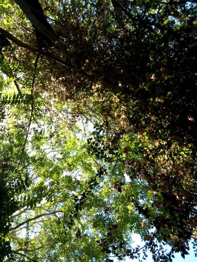 Zonlichtstralen onder bladeren stock afbeelding