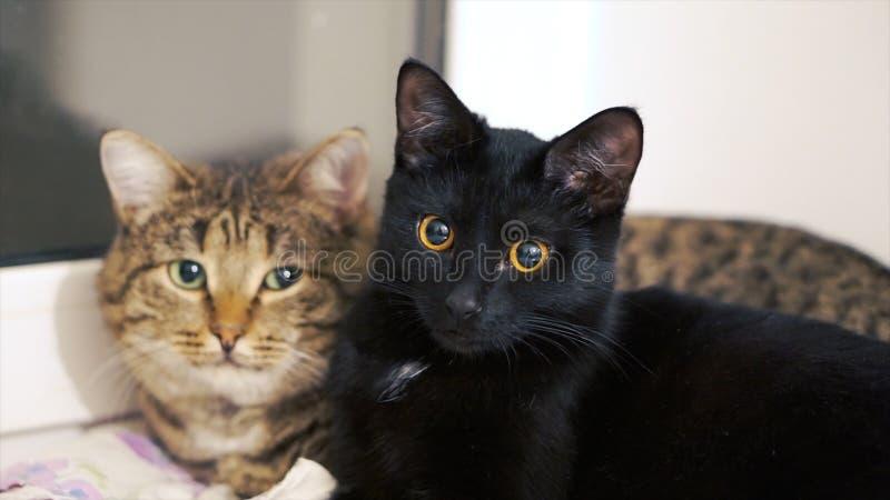 Zonnebaadt mooie kat twee in de zon op de vensterbank klem Twee katten thuis op de vensterbank royalty-vrije stock foto