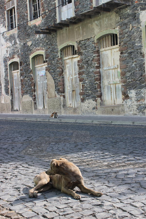 Zonnebadende verdwaalde hond in troosteloze stad in Santo Antao stock foto's