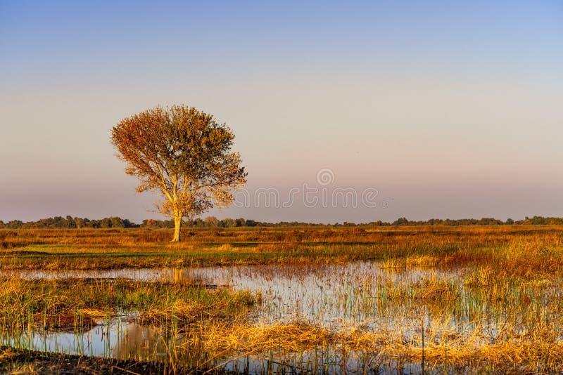 Zonnebeeld van de wetlands van San Luis National Wildlife Refuge, Merced County, Californië stock foto